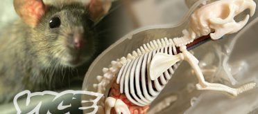 Vice - The Invincible 'Super Rats' Genetically Resistant to Poison